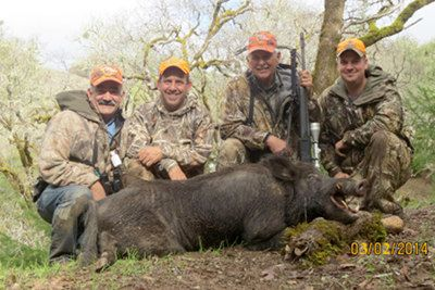 Nice Boars at Hedgepath